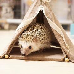 Casa del erizo Hedgehog Pet Cage, Animal Room, Animals And Pets, Little Ones, Rope Knots, Hedgehogs, Bird, Drawings, Random