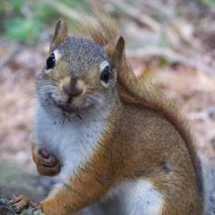 Image result for clipart squirrel with chocolate cake