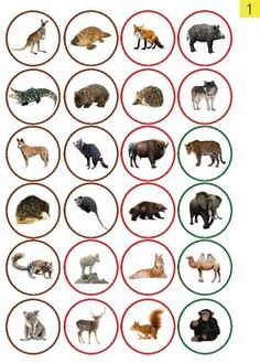 Animals Continents Montessori Cards for the. by I Believe in Montessori Continents Activities, Les Continents, Preschool Learning Activities, Preschool Themes, Preschool Science, Montessori Trays, Montessori Materials, Animal Facts For Kids, Animals For Kids
