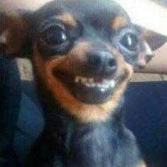Me watching mainstream news media. Funny Dog Memes, Cartoon Memes, Cat Memes, Funny Dogs, Cute Dogs, Cute Animal Memes, Cute Funny Animals, Cute Little Animals, Funny Cute