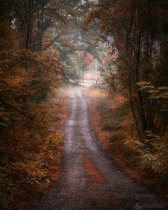 .......... #vzcomood #superhubs_power #tree_captures #tree_magic #photoarena_nature  #ig_myshot #ig_today  #ig_shotz_trees #magical_shots #amazingphotohunter #globalcapture @splendid_woodlands #nature_perfection #igbest_shotz #igrefined #bestshotz_tree #ig_exquisite #tree_brilliance #transfer_visions #everything_imaginable #loves_trees_rural #earth_shotz #marvelshots #main_vision  #ig_countryside #tv_allnature #igbest_shotz #fingerprintofgod #world_shotz #igpodium