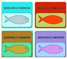 """BBC News reports: """"GM salmon can breed with wild fish and pass on genes."""""""