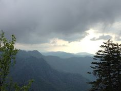 In the Smokies - Mt. LeConte--Up, Up in the Clouds! If I remember it raises above treelike...rare in the East