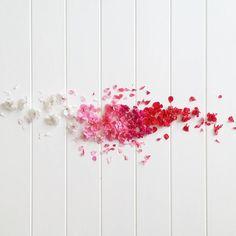 Hello spring!!!! Foraged petals