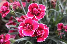 Afbeeldingsresultaat voor witte bloem