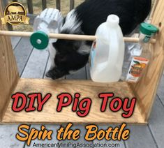 DIY Pig Toy - Treat Dispensing Toy - Mini Pig Spin the Bottle Game. An easy & fun enrichment activity for your mini pig. Provides hours of fun!
