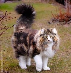 Excellent pretty cats tips are readily available on our website. Check it out and you will not be sorry you did. Cute Cats And Kittens, Baby Cats, Cool Cats, Kittens Cutest, Black Kittens, Siamese Kittens, Fluffy Kittens, Bengal Cats, Kittens Playing
