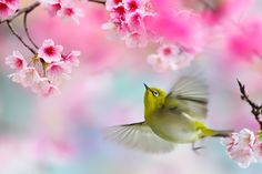 ~ Cute moment ~ by FuYi Chen on 500px