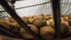 Si juegas a la lotería, cúbrete bien las espaldas   https://www.legalitas.com/actualidad/Si-juegas-a-la-loteria-cubrete-bien-las-espaldas