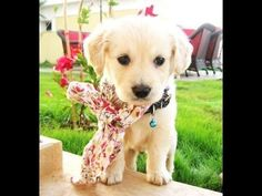 Top 10 Cutest Dogs 2013