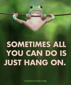 Hang in there frog life, funny animals, true quotes, best quotes, motivational Cute Quotes, Great Quotes, Funny Quotes, Funny Memes, Memes Humor, Fun Sayings, Humor Quotes, Hang In There Quotes, Hang On Quotes
