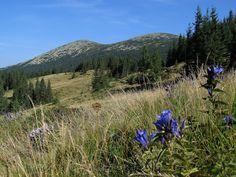 Gorgany Mount Rainier, Mountains, Nature, Travel, Geography, Europe, Naturaleza, Viajes, Destinations