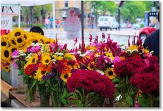 Rainy Day Riot of Colors; Dane County Farmers' Market on the Square, Madison, Wisconsin