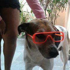 Meu cachorro,  lindo