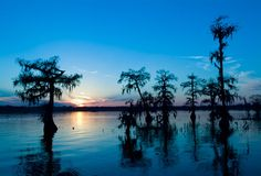 Cypress Island Preserve, Louisiana : Louisiana's state tree is the bald cypress. Wood from this tree is cultivated for its resistance to rot and insect damage.