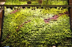 Green Wall at west elm Seattle-Can I have this in my house? Landscape Designs, Landscape Architecture, Outdoor Spaces, Outdoor Living, Garden Art, Home And Garden, Landscaping Images, Bainbridge Island, Living Walls