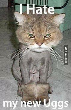 I love shaved cats!!!!!