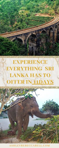 Read my ultimate 11 day Sri Lanka Itinerary! It includes everything you need to know & the top 4 cities; Kandy, Ella, Yala and Bentota. Asia Travel, Time Travel, Sri Lanka Itinerary, Spice Garden, Huge Waves, Wild Elephant, Take Off Your Shoes, Most Luxurious Hotels, Rainy Season