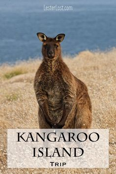 Australia is a big country and, although I have been living here for many years, I am still discovering new places. Kangaroo Island will blow your mind: wildlife, beautiful nature, great food, historical landmarks… Here are the best things to do on your Kangaroo Island trip.  #kangarooisland #travel #southaustralia #travelblog via @Delphine LesterLost