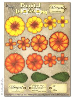 Decoupage A4 Sheet - Build A Blossom, Marigold