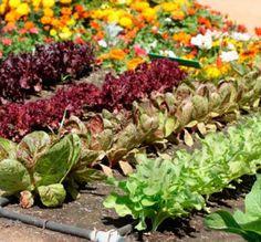 Guia da agricultura biológica