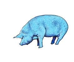"""""""Pig"""" Stickers by theroywood 