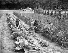 1943.  Victory garden of Boy Scout Troop 49.  Delaware Avenue.  1325-003-206 #1938.  Delaware Public Archives.  www.archives.delaware.gov