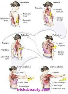 Eye-Opening Useful Tips: Blood Pressure Essential Oils Immune System blood pressure remedies medicine. Fitness Workouts, Men's Fitness, Shoulder Rehab, Shoulder Joint, Muscles Of The Shoulder, Pinched Nerve In Shoulder, Shoulder Pain Relief, Shoulder Strap, Muscle Anatomy