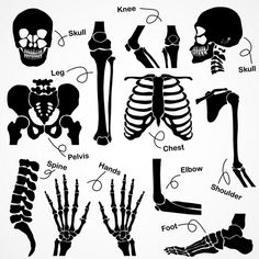 Orthopedic Conditions