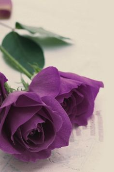 My love of the color purple.
