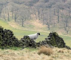 Sheep | Flickr - Photo Sharing!