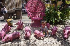 #piggy #garden #kids