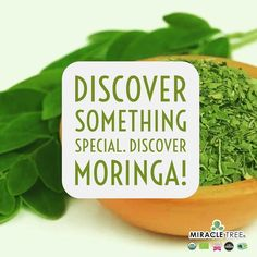 Will today be the day? Discover something special - discover #moringa today! Learn more at www.miracletree.co!