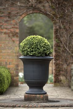 A Geo Rok French Style urn at Cloudehill. A Geo Rok French Style urn at Cloudehill. Jardin Decor, Formal Garden Design, Garden Urns, Boxwood Garden, Cacti Garden, Urn Planters, Small Gardens, Backyard Landscaping, Landscaping Ideas