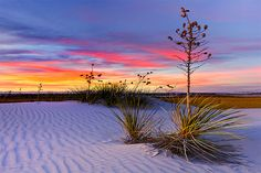 White Sands, New Mexico Sunset. This place is beautiful! We went here whenever we played New Mexico State (while I played softball for Marshall). Texas, Cosmos, Beautiful World, Beautiful Places, Beautiful Beach, White Sands New Mexico, Yucca Plant, Yucca Tree, White Sands National Monument