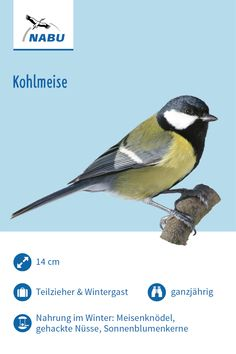 Die Kohlmeise – Well come To My Web Site come Here Brom State Parks, Bushcraft, Indoor Garden, Kids Learning, Animals And Pets, Birds, Nature, Kindergarten, Wallet