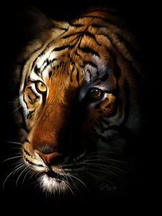 Tiger in the Dark by giovannag