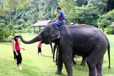 Tabara de elefanti Mae Sa, Thailanda- una dintre cele mai mari tabere de elefanti din nordul Thailandei. E uluitor sa vezi cat de frumos stiu sa picteze, sa sa se joace si chiar sa multumeasca. Nu am ratat nici o plimbare cu elefantul, pentru a ma putea bucura mai bine de vegetatia luxurianta a junglei tropicale. Cateodata era si pacat sa pierzi frumusetea momentului pozand intr-o parte si in alta si nu de putine ori am fost furata de peisajele intalnite pe traseu.
