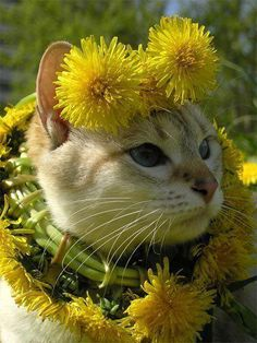 Ten Cat Flowers That Dogs Have Grown for Fun (Cats in Flower Costumes) Cute Kittens, Cats And Kittens, Pretty Cats, Beautiful Cats, Animals Beautiful, Pretty Kitty, Cool Cats, Funny Animals, Cute Animals