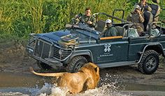 Kruger National Park South Africa safari - This definitive Kruger Park safari accommodation guide offers suggested package tours, day trips, safari lodges Kruger National Park, National Parks, South Africa Safari, V&a Waterfront, Safari Holidays, Game Reserve, African Safari, Walking In Nature, Day Tours