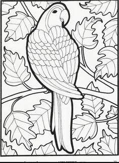 Bird Coloring Pages, Printable Adult Coloring Pages, Doodle Coloring, Coloring Books, Petit Camping Car, Mandala, Owl Photos, Bird Quilt, Art Programs