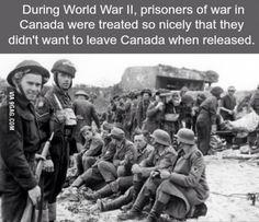 France, Normandie, Juno Beach, POWs allemands rassemblés sur la plage, D-Day Wtf Fun Facts, True Facts, Random Facts, Crazy Facts, D Day Facts, Random Stuff, Strange Facts, History Memes, History Facts