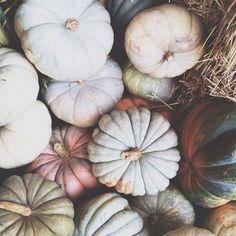 Autumn gourds ghost pumpkins squash