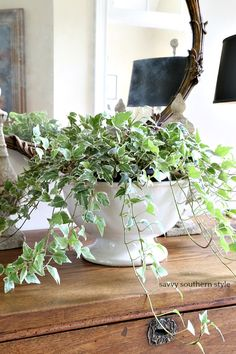 French Country Cottage, French Country Style, French Country Decorating, Country Homes, Ivy Plants, Indoor Plants, Savvy Southern Style, Beautiful Bouquet Of Flowers, Deco Floral