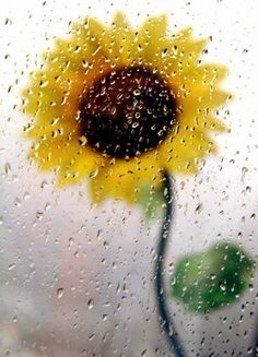 Funny how a Sunflower can brighten a rainy day