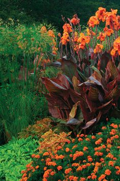 Hot colored annuals (Coleus and marigold) with orange-flowered Canna, flowers, gardening, landscaping, landscape design