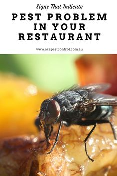 Here are a few signs that you must watch out for if you are doubtful of pest infestation at your restaurant. Pest Control, Commercial, Industrial, Restaurant, Signs, Watch, Clock, Diner Restaurant, Shop Signs
