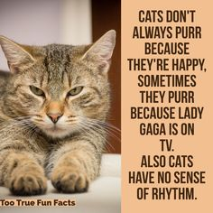 Cat's listen to music all the time. Really.   Too True Fun Facts is your Pinterest source for fun fact parody and satire. Comedy in the finest tradition