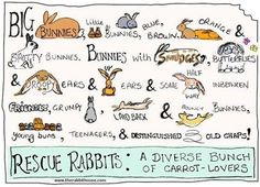 Rescue Rabbits:  A Diverse Bunch of Carrot-Lovers