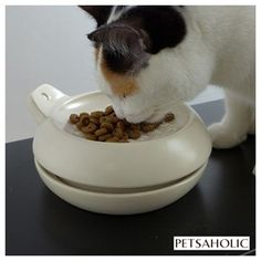 Features Of Petsaholic Ant Proof Ceramic Cat Bowl In Brief